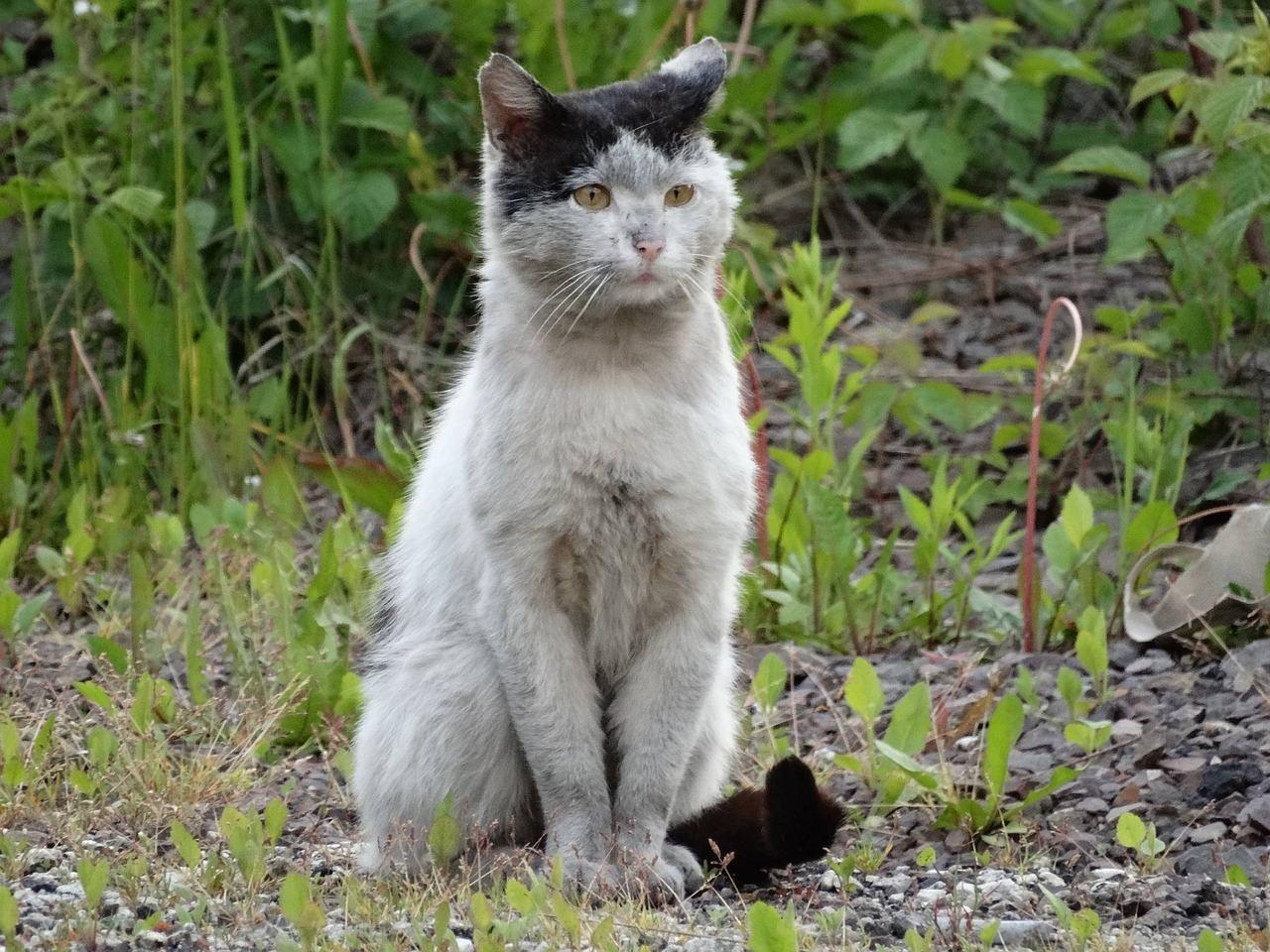 Gatos abandonados en España