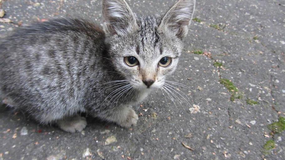 7 factores a tener en cuenta antes de adoptar un gato