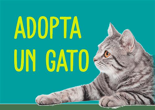 Adopta un gato