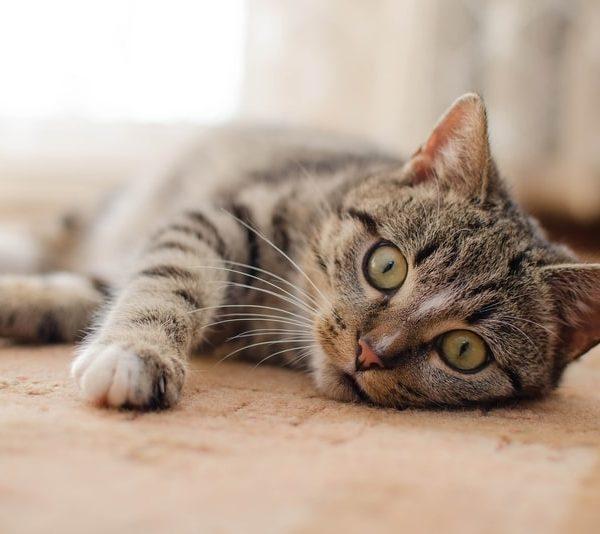 Material necesario para la llegada de un gato