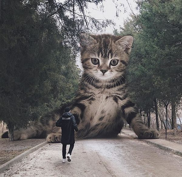 Cachorro gato gigante