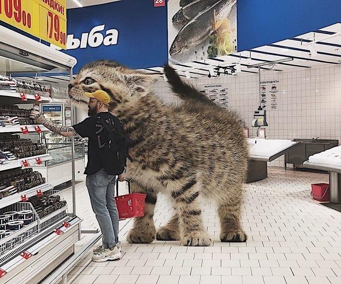 Gato gigante en supermercado