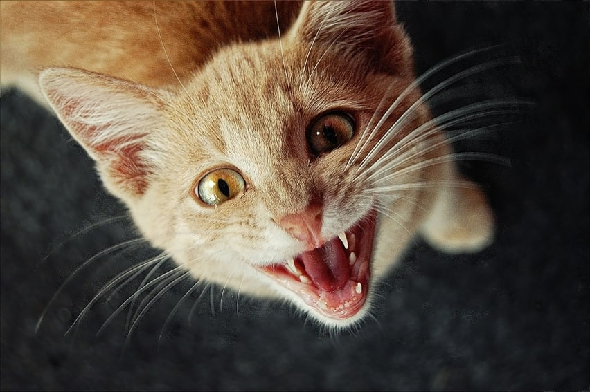 Fondos de gatos cachorros