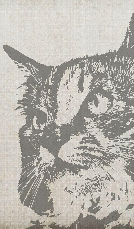 Fondos de gatos originales