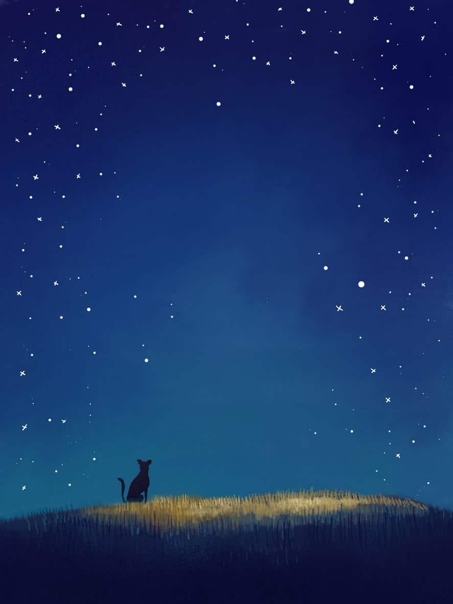 Fondo noche gato