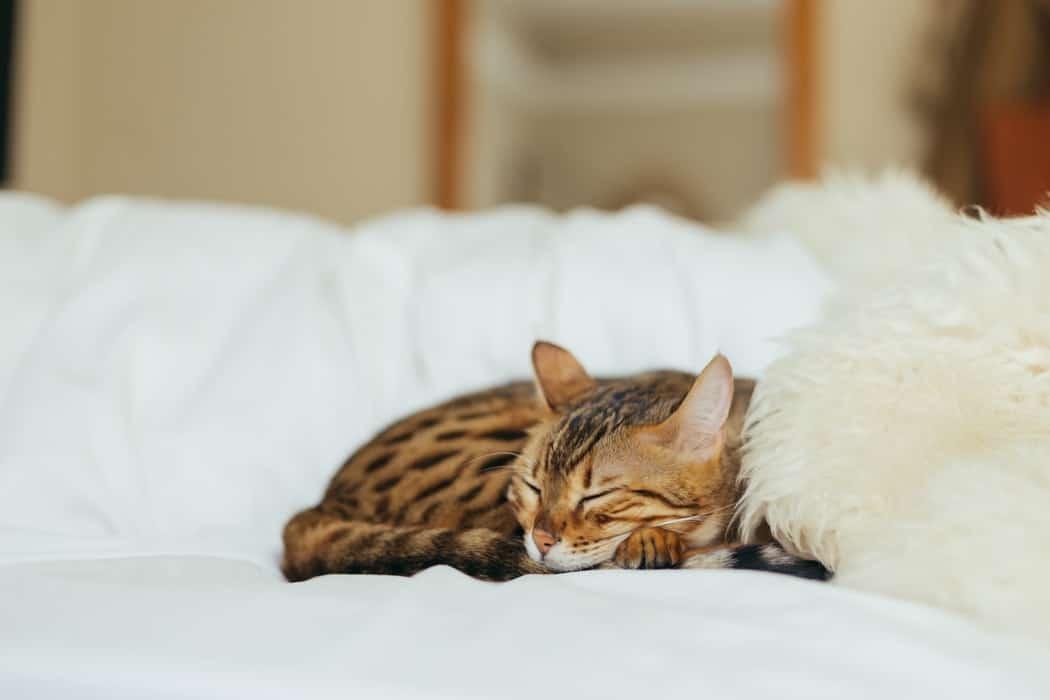 gato relajado