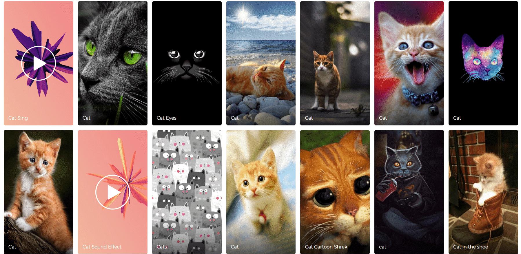 Fondos de pantalla de gatos zedge